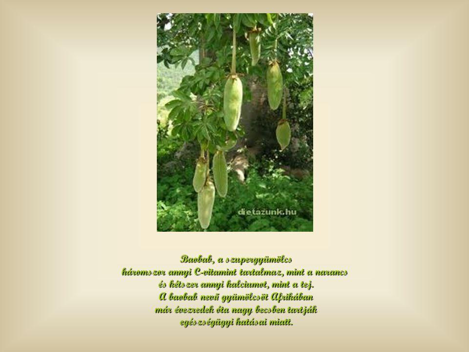 Baobab, a szupergyümölcs háromszor annyi C-vitamint tartalmaz, mint a narancs és kétszer annyi kalciumot, mint a tej.