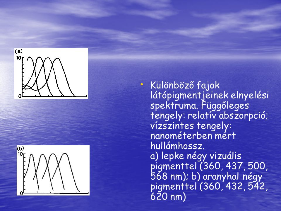 Különböző fajok látópigmentjeinek elnyelési spektruma. Függőleges tengely: relatív abszorpció; vízszintes tengely: nanométerben mért hullámhossz. a) l