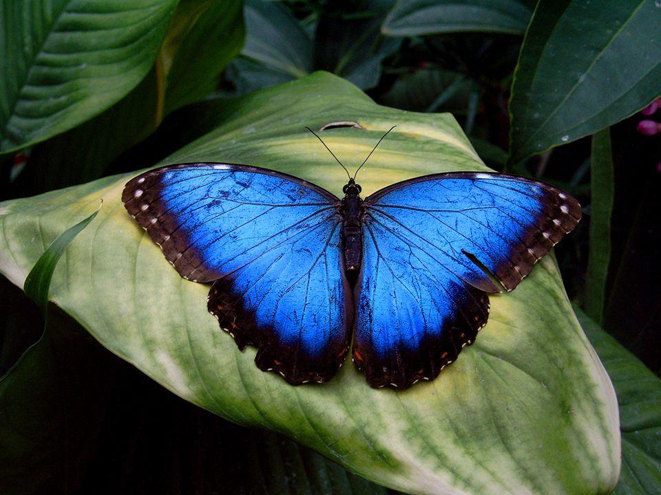 Az UV-látás A rovarok képviselõinek retinájában rendre kettõ, három, ill.