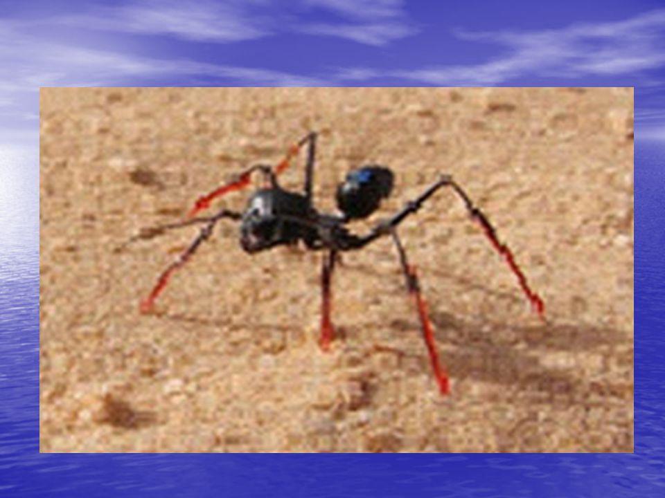Táplálékkeresés UV-fény segítségével Az UV-pigmenteket néhány rovar a színérzékelésben használja, de a térbeli érzékelésükben is szerepük lehet.