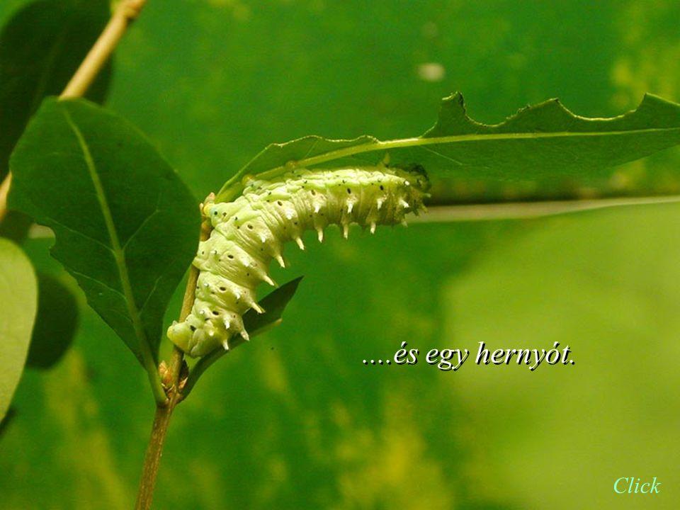 Azonban az Isten adott: egy kaktuszt... Click
