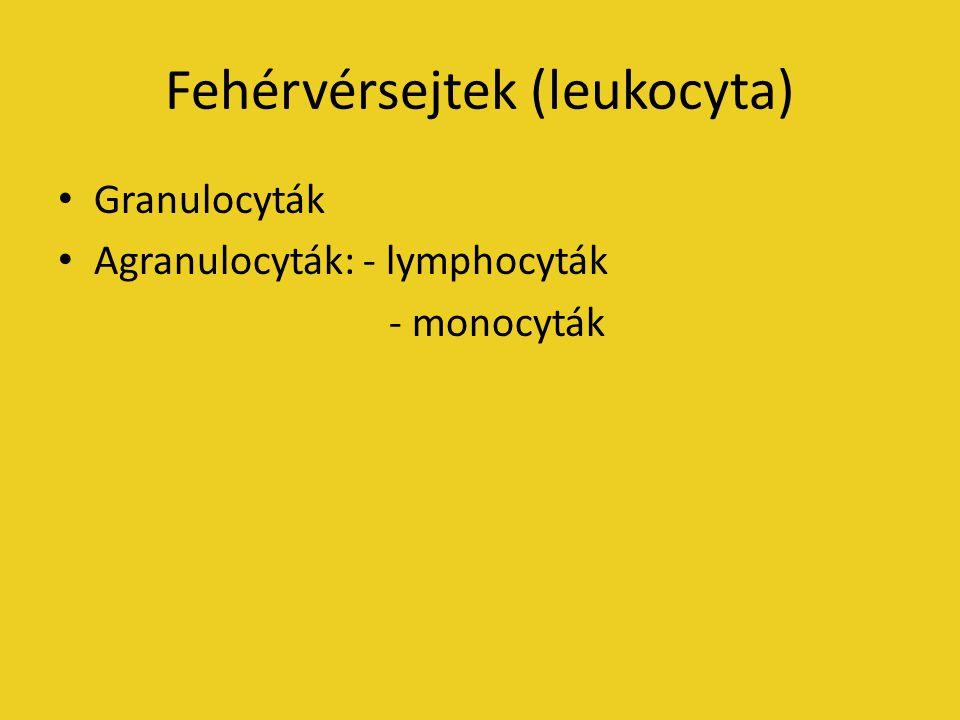 Fehérvérsejtek (leukocyta) Granulocyták Agranulocyták: - lymphocyták - monocyták