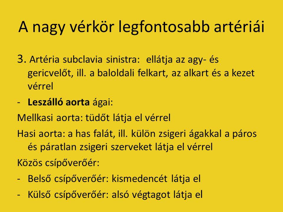 A nagy vérkör legfontosabb artériái 3.