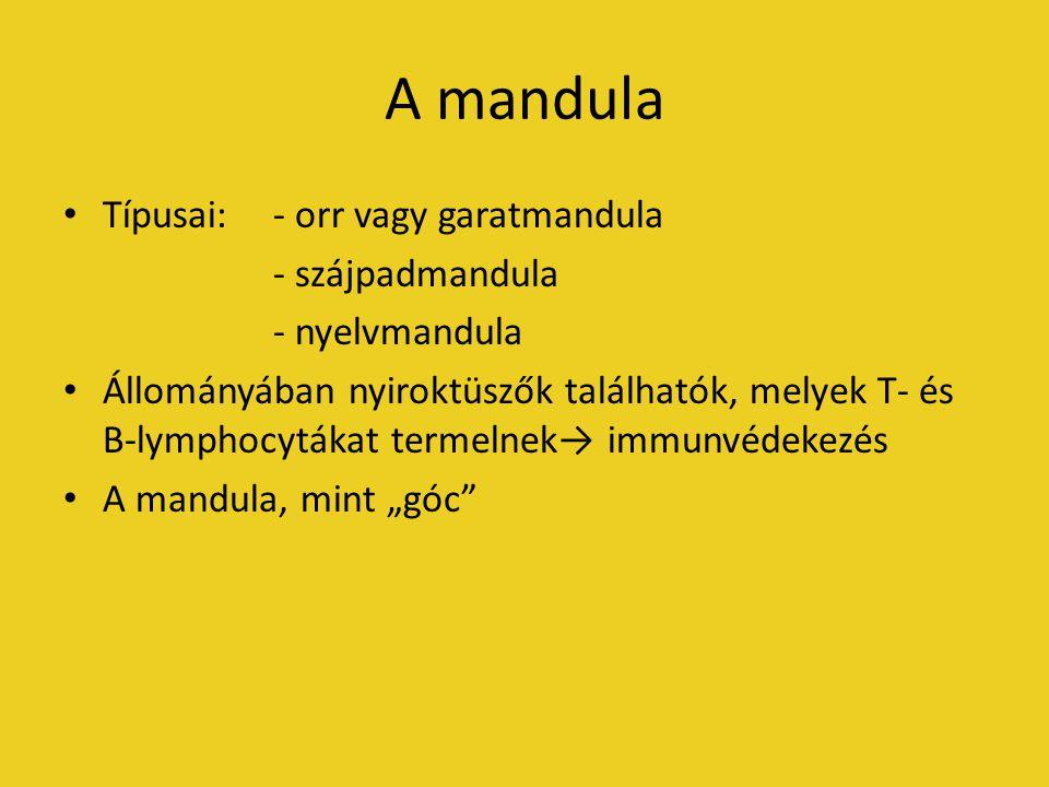 """A mandula Típusai:- orr vagy garatmandula - szájpadmandula - nyelvmandula Állományában nyiroktüszők találhatók, melyek T- és B-lymphocytákat termelnek→ immunvédekezés A mandula, mint """"góc"""