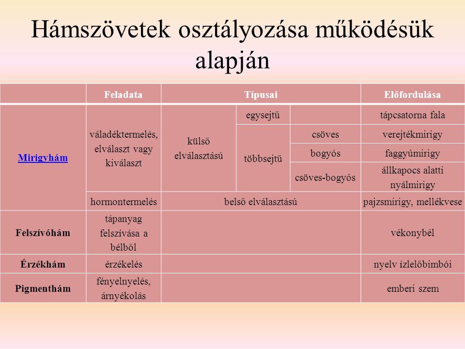 Hámszövetek osztályozása működésük alapján FeladataTípusaiElőfordulása Mirigyhám váladéktermelés, elválaszt vagy kiválaszt külső elválasztású egysejtű