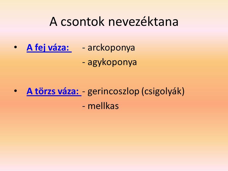 A csontok nevezéktana A fej váza: - arckoponya A fej váza: - agykoponya A törzs váza: - gerincoszlop (csigolyák) A törzs váza: - mellkas