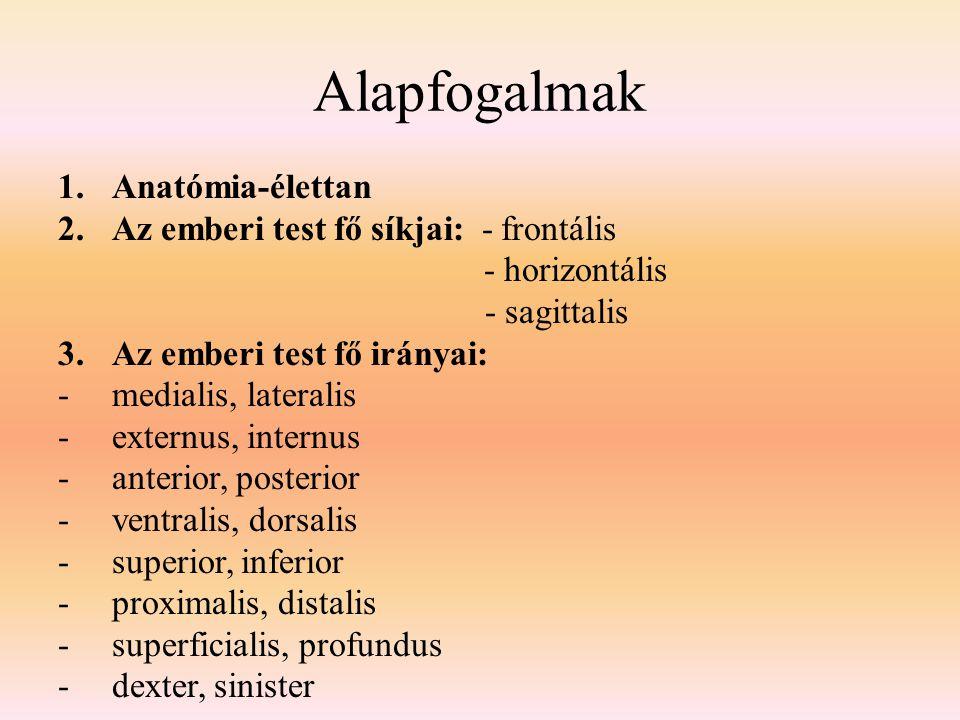 Alapfogalmak 1.Anatómia-élettan 2.Az emberi test fő síkjai: - frontális - horizontális - sagittalis 3.Az emberi test fő irányai: -medialis, lateralis -externus, internus -anterior, posterior -ventralis, dorsalis -superior, inferior -proximalis, distalis -superficialis, profundus -dexter, sinister