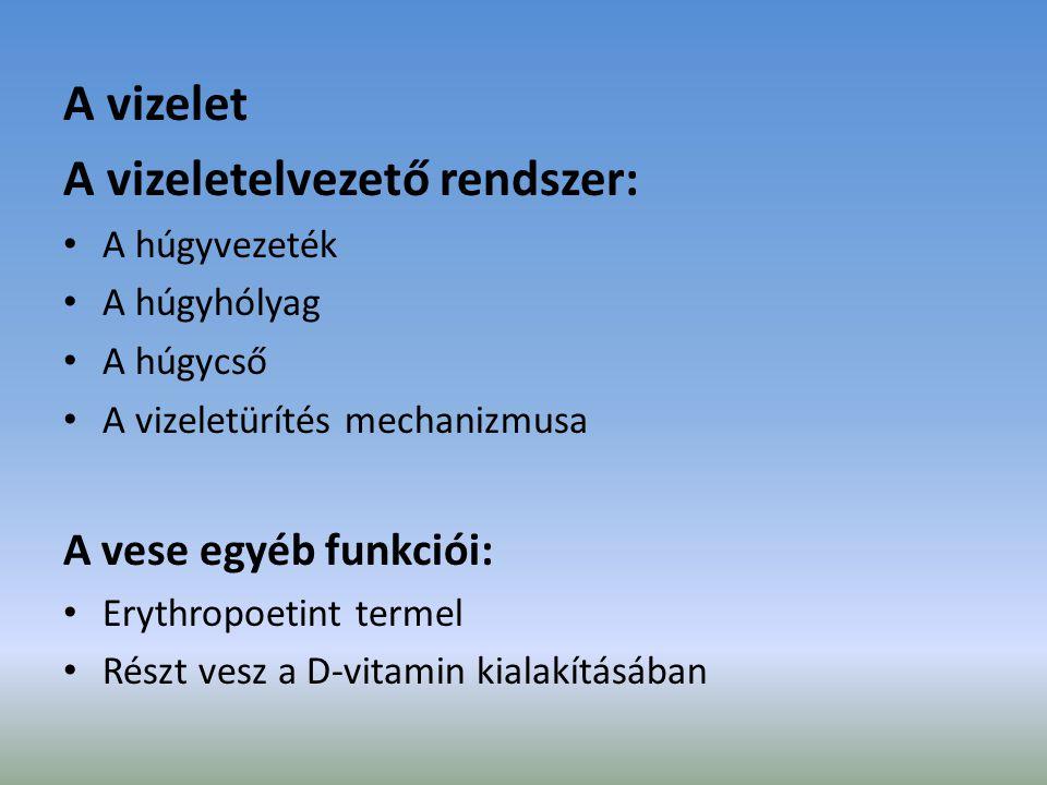 A vizelet A vizeletelvezető rendszer: A húgyvezeték A húgyhólyag A húgycső A vizeletürítés mechanizmusa A vese egyéb funkciói: Erythropoetint termel R