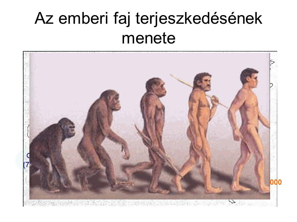 Homo Sapiens Sapiens A gondolkodó ember Egy faj 4 fajta – a rasszok kialakulás europid, negrid, mongolid, ausztralid Eszközeit fejleszti (szigony, íj, nyíl), pattintott kő Mágia, totemizmus (őstisztelet), fetisizmus (tárgyt.) Sziklarajzok, barlangfestés (Altamira-barlang) Beszédgesztusok megjelenése Szellemi, érzelmi, technikai fejlődés