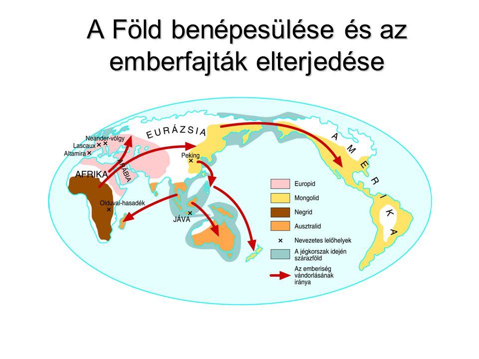 Az emberi faj terjeszkedésének menete Gyökerek (7 millió év) 500 000 1 000 000 i.e.