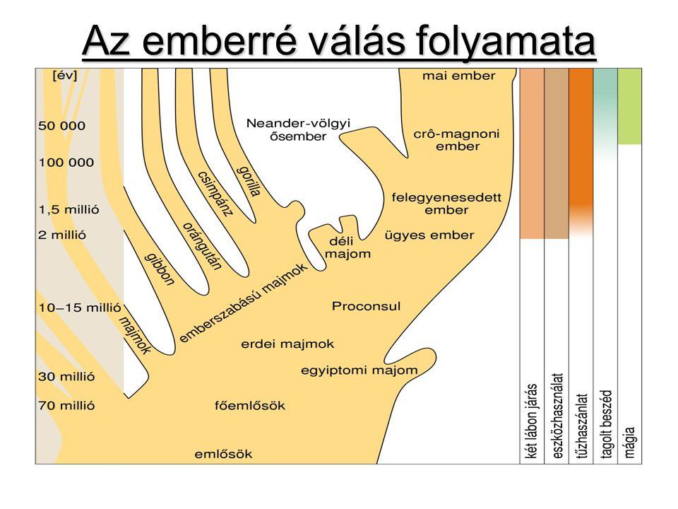 """Az ember kialakulása 70millió éve – a majom és az ember közös őse (mókusszerű főemlős) 15millió éve – """"emberszabásúak - erdei majom lelet : Rudapithecus(csimpánzszerű) 5,5–2millió éve – """"Australopithecus – déli majom -eszközt használ, agytérfogata 1/3-a az emberének -fejlődése zsákutca"""