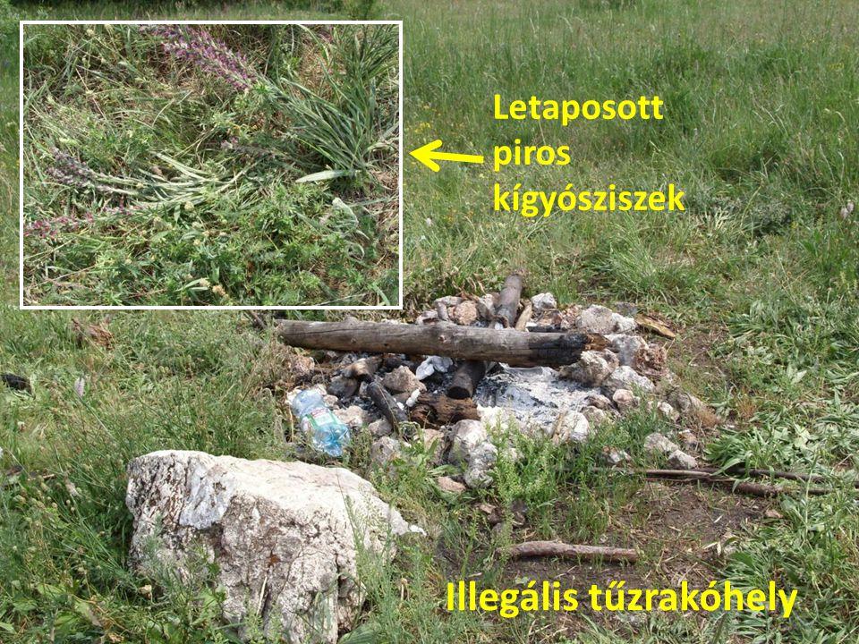 Illegális tűzrakóhely Letaposott piros kígyósziszek