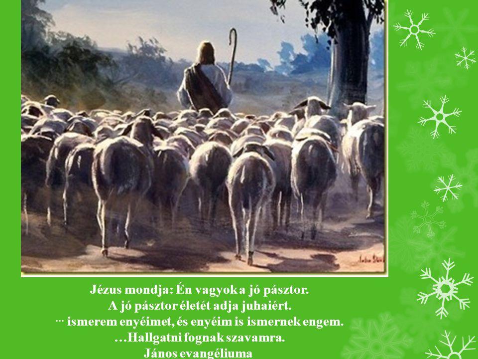 Jézus mondja: Én vagyok a jó pásztor.A jó pásztor életét adja juhaiért.