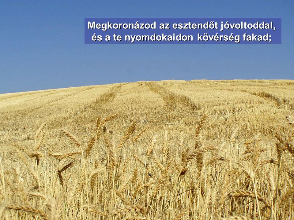 Megitatod barázdáit, göröngyeit meglapítod; záporesővel meglágyítod azt, termését megáldod.