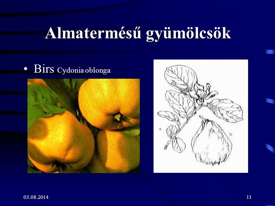 03.08.201411 Almatermésű gyümölcsök Birs Cydonia oblonga