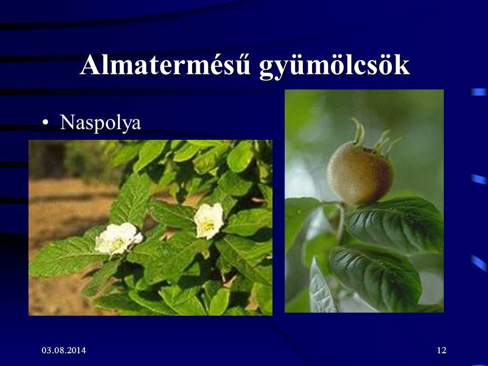 03.08.201412 Almatermésű gyümölcsök Naspolya
