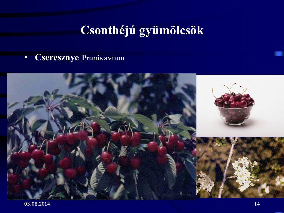 03.08.201414 Csonthéjú gyümölcsök Cseresznye Prunis avium
