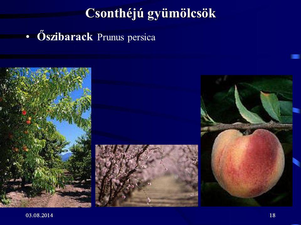 03.08.201418 Csonthéjú gyümölcsök Őszibarack Prunus persica