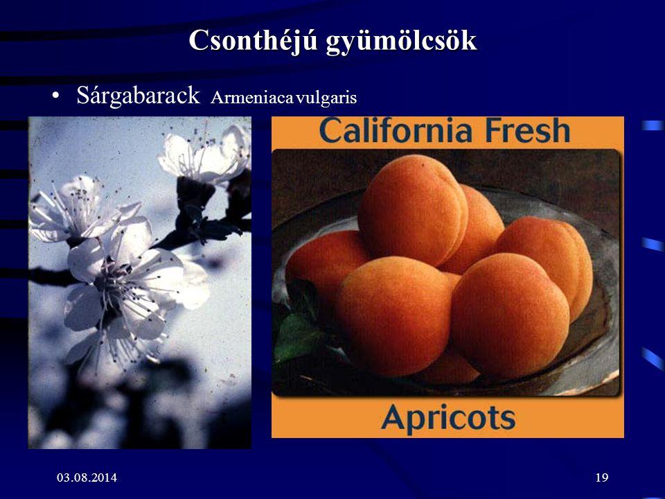03.08.201419 Csonthéjú gyümölcsök Sárgabarack Armeniaca vulgaris