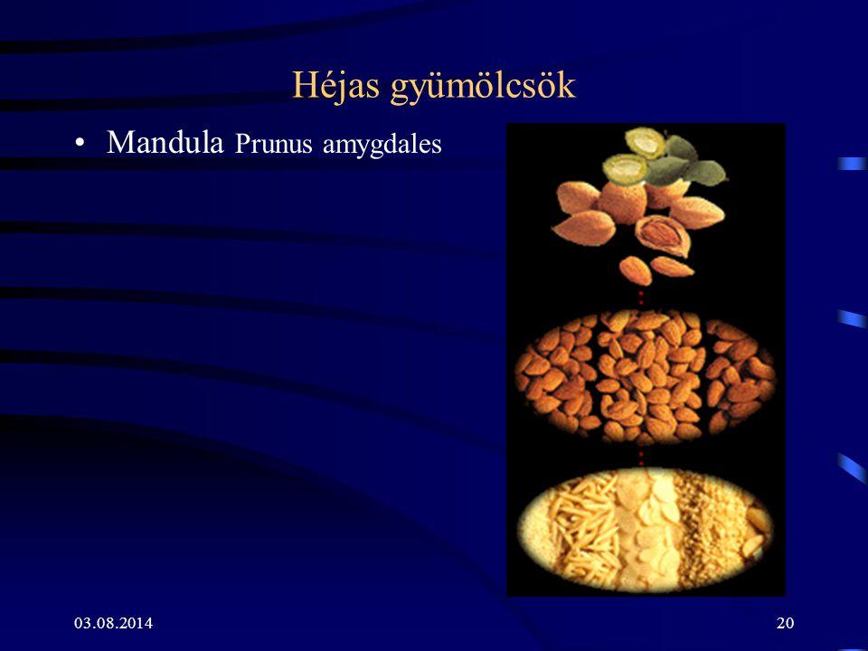 03.08.201420 Héjas gyümölcsök Mandula Prunus amygdales