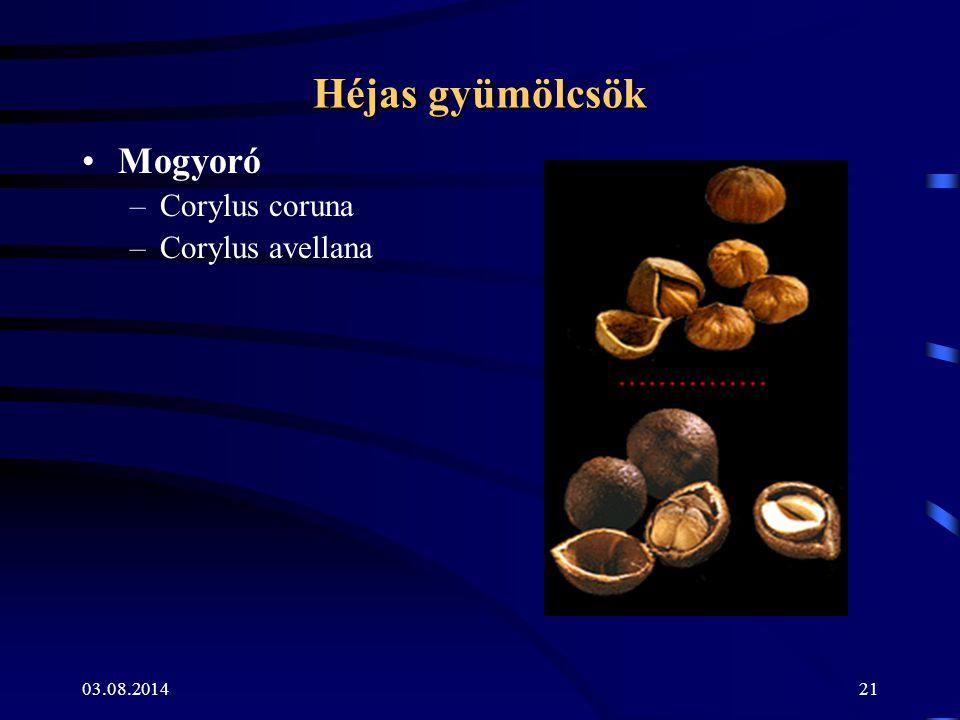 03.08.201421 Héjas gyümölcsök Mogyoró –Corylus coruna –Corylus avellana