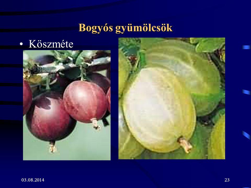 03.08.201423 Bogyós gyümölcsök Köszméte