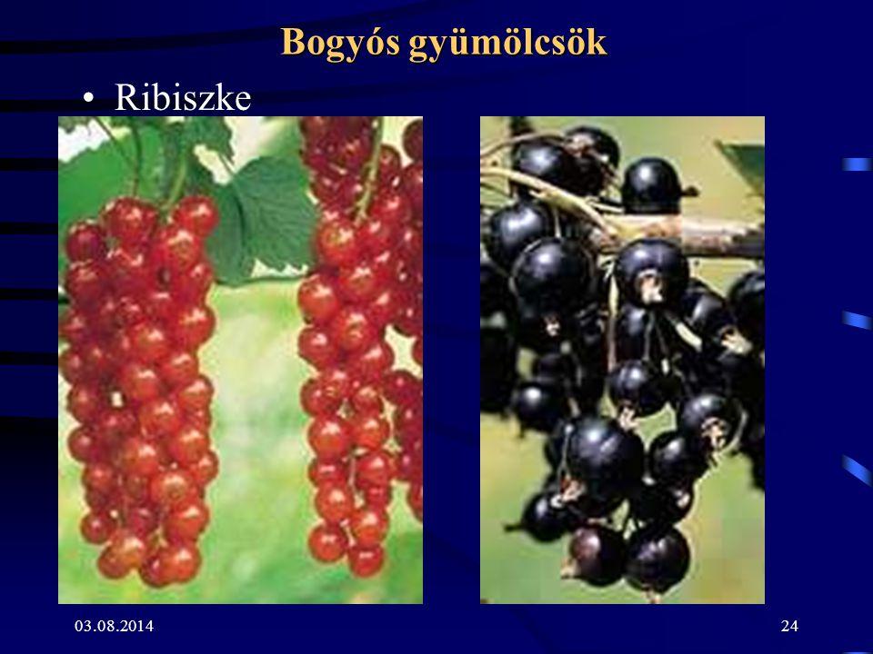03.08.201424 Bogyós gyümölcsök Ribiszke