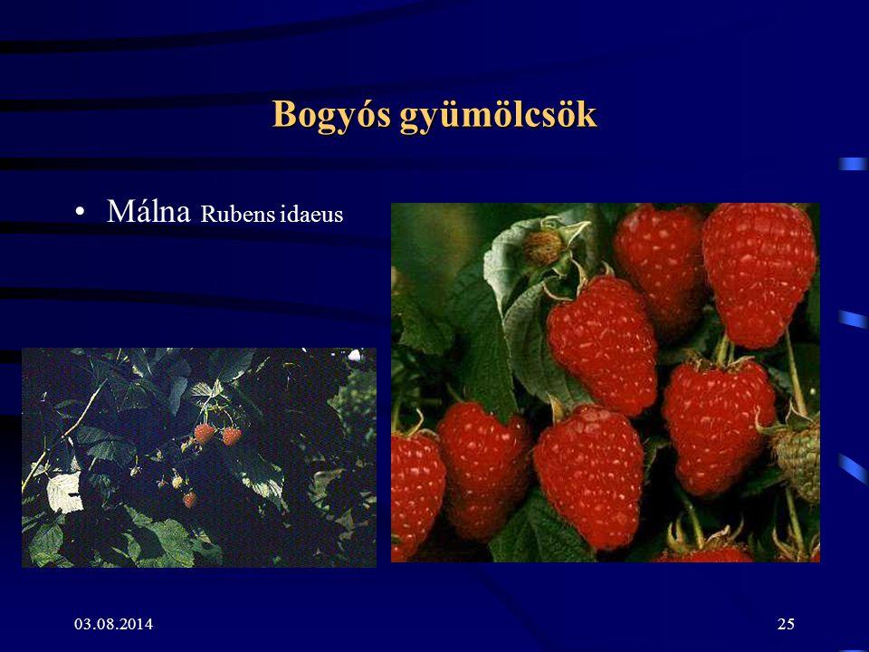 03.08.201425 Bogyós gyümölcsök Málna Rubens idaeus
