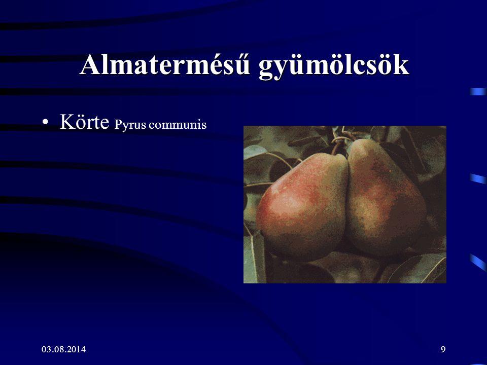9 Almatermésű gyümölcsök Körte Pyrus communis