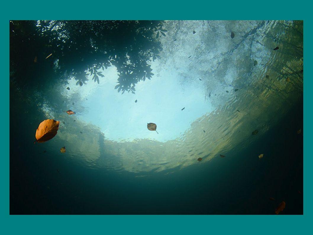 A PAR csökkenése a mélység függvényében különféle tavakban N: Lake Nakuru (Kenya) LCM, LCD: Bodeni-tó (május, december) S:Schöchsee (Németo, június) K: Königsee (Németo) LT: Lake Tahoe (USA)