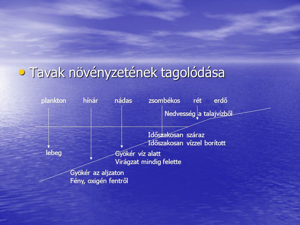 Tavak növényzetének tagolódása Tavak növényzetének tagolódása plankton hínár nádas zsombékos rét erdő lebeg Gyökér az aljzaton Fény, oxigén fentről Gy
