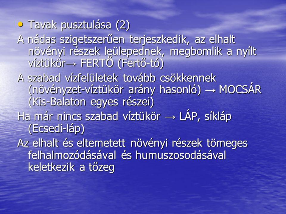 Tavak pusztulása (2) Tavak pusztulása (2) A nádas szigetszerűen terjeszkedik, az elhalt növényi részek leülepednek, megbomlik a nyílt víztükör → FERTŐ