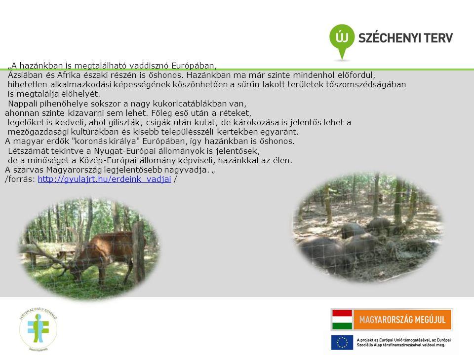 """""""A hazánkban is megtalálható vaddisznó Európában, Ázsiában és Afrika északi részén is őshonos."""