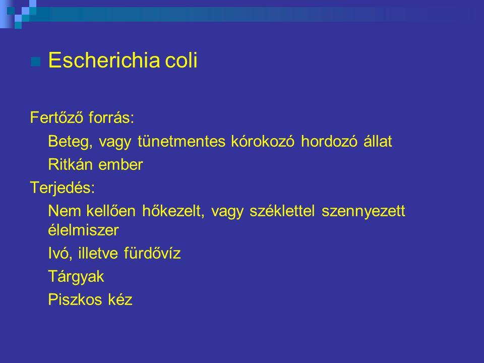Escherichia coli Fertőző forrás: Beteg, vagy tünetmentes kórokozó hordozó állat Ritkán ember Terjedés: Nem kellően hőkezelt, vagy széklettel szennyezett élelmiszer Ivó, illetve fürdővíz Tárgyak Piszkos kéz