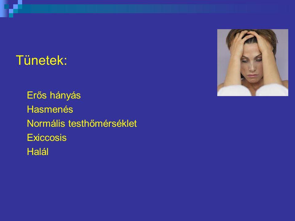Tünetek: Erős hányás Hasmenés Normális testhőmérséklet Exiccosis Halál