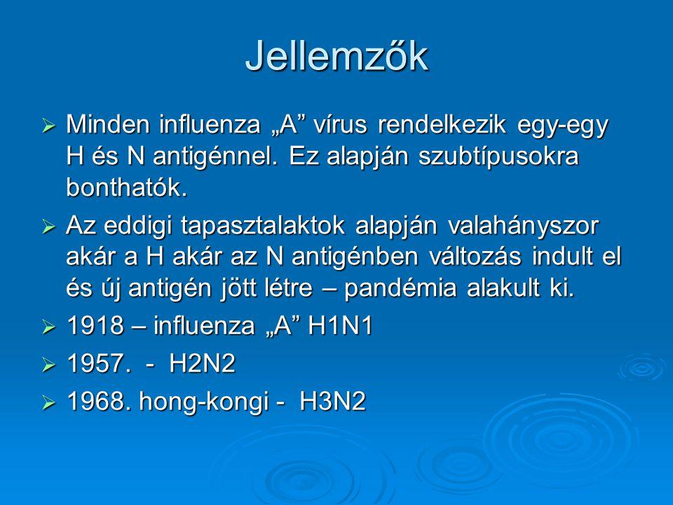 """Jellemzők  Minden influenza """"A"""" vírus rendelkezik egy-egy H és N antigénnel. Ez alapján szubtípusokra bonthatók.  Az eddigi tapasztalaktok alapján v"""
