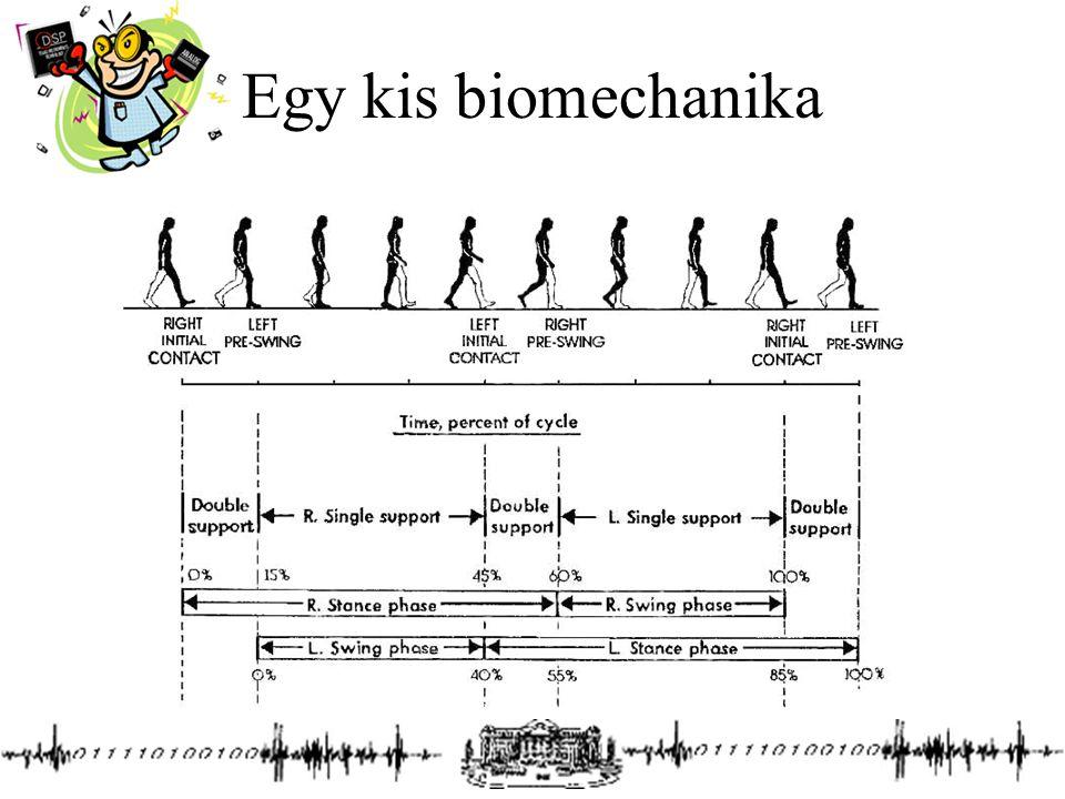 Egy kis biomechanika