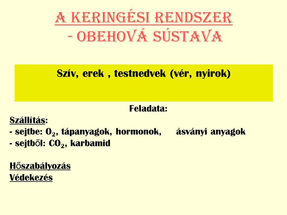 A KERINGÉSI RENDSZER - Obehová sústava Szív, erek, testnedvek (vér, nyirok) Feladata: Szállítás: - sejtbe: O 2, tápanyagok, hormonok, ásványi anyagok