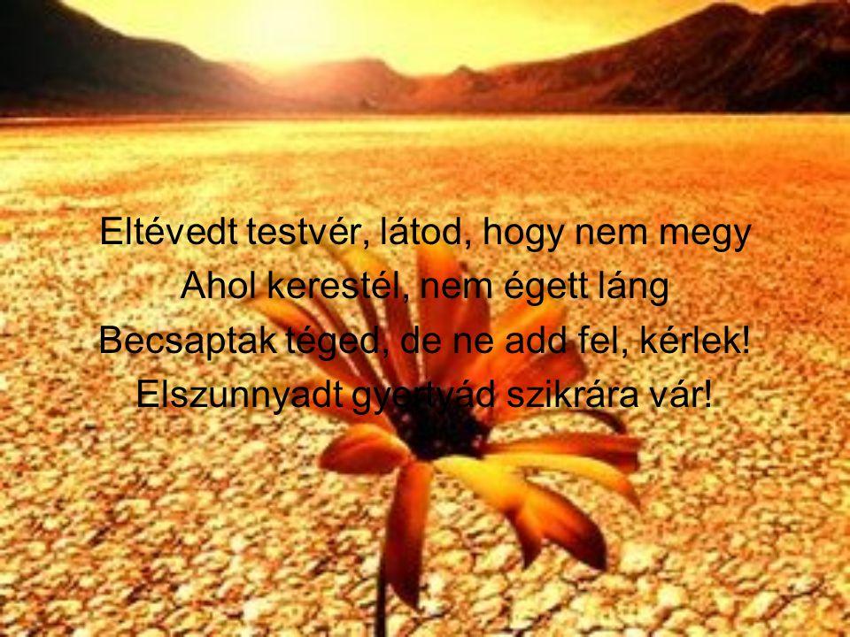 Eltévedt testvér, látod, hogy nem megy Ahol kerestél, nem égett láng Becsaptak téged, de ne add fel, kérlek.