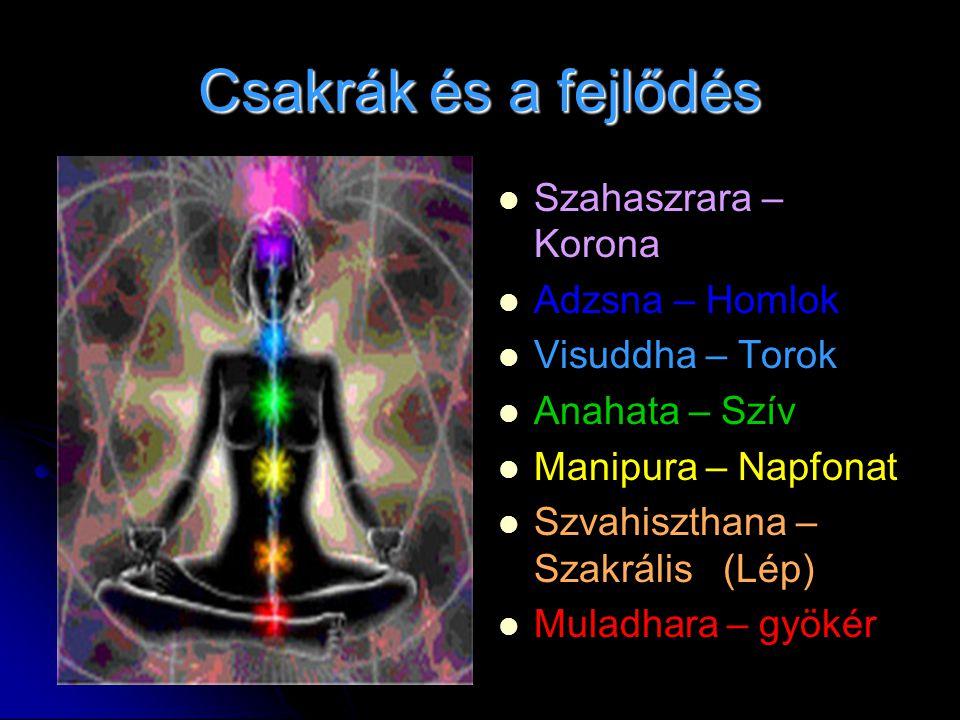 Csakrák és a fejlődés Szahaszrara – Korona Adzsna – Homlok Visuddha – Torok Anahata – Szív Manipura – Napfonat Szvahiszthana – Szakrális (Lép) Muladha