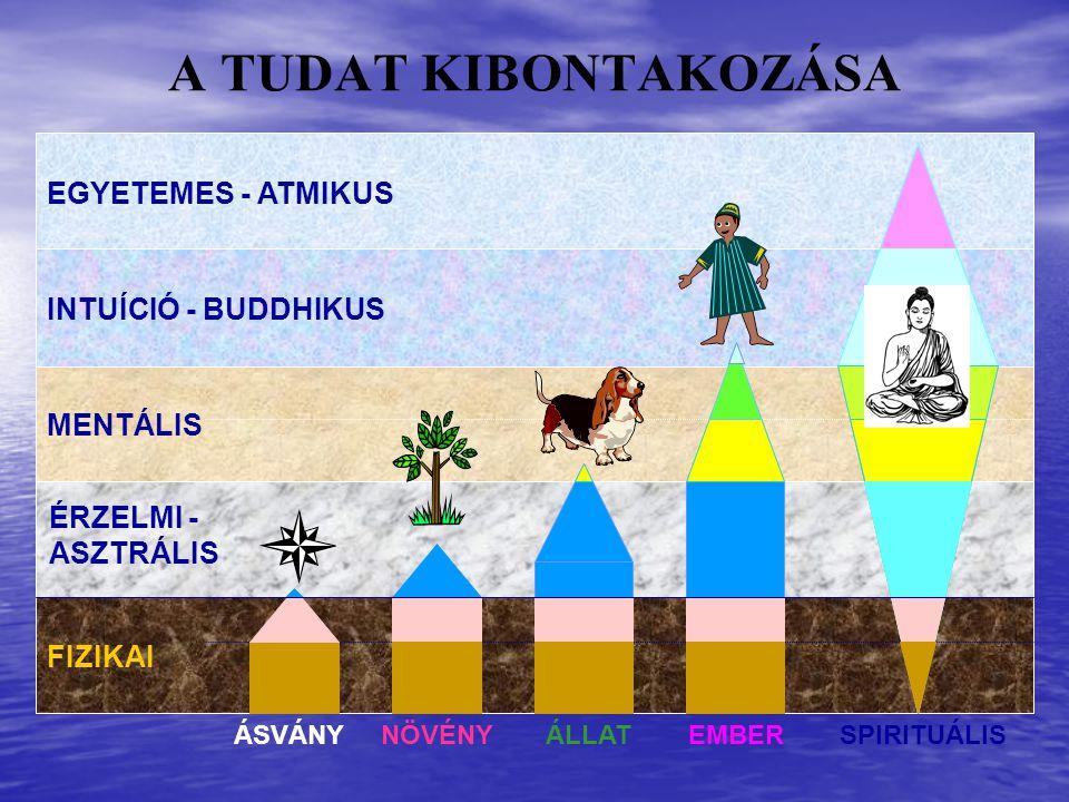 EGYETEMES - ATMIKUS INTUÍCIÓ - BUDDHIKUS MENTÁLIS ÁSVÁNYNÖVÉNYEMBERÁLLATSPIRITUÁLIS FIZIKAI ÉRZELMI - ASZTRÁLIS A TUDAT KIBONTAKOZÁSA