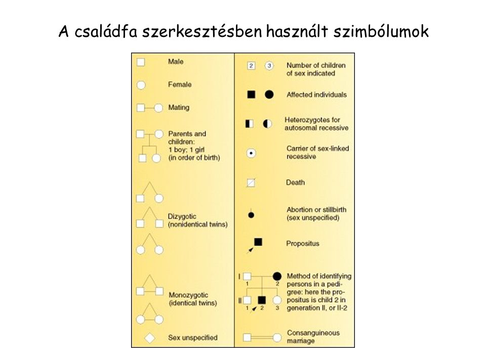 A családfa szerkesztésben használt szimbólumok