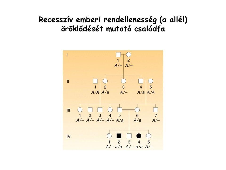 Recesszív emberi rendellenesség (a allél) öröklődését mutató családfa