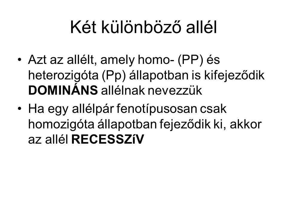 Két különböző allél Azt az allélt, amely homo- (PP) és heterozigóta (Pp) állapotban is kifejeződik DOMINÁNS allélnak nevezzük Ha egy allélpár fenotípusosan csak homozigóta állapotban fejeződik ki, akkor az allél RECESSZíV