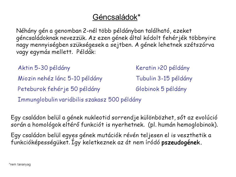 Géncsaládok* Néhány gén a genomban 2-nél több példányban található, ezeket géncsaládoknak nevezzük.