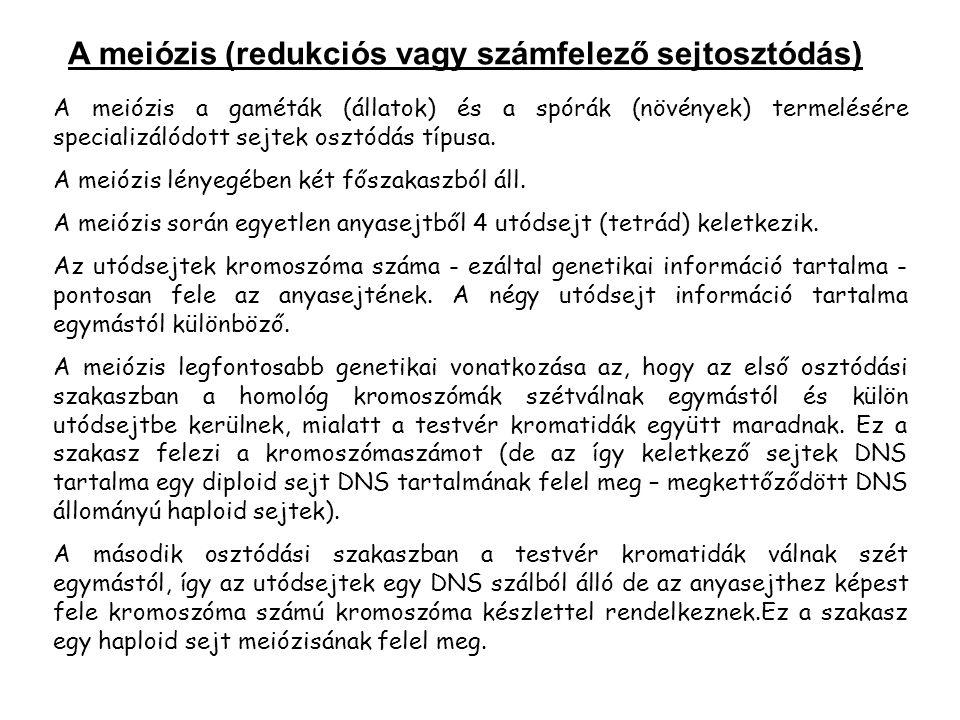 A meiózis a gaméták (állatok) és a spórák (növények) termelésére specializálódott sejtek osztódás típusa.