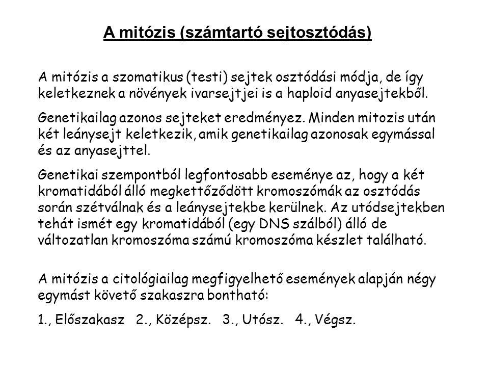 A mitózis a szomatikus (testi) sejtek osztódási módja, de így keletkeznek a növények ivarsejtjei is a haploid anyasejtekből.