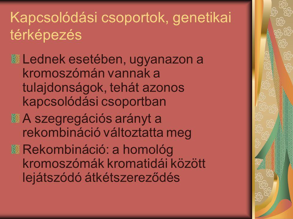 Kapcsolódási csoportok, genetikai térképezés Lednek esetében, ugyanazon a kromoszómán vannak a tulajdonságok, tehát azonos kapcsolódási csoportban A s