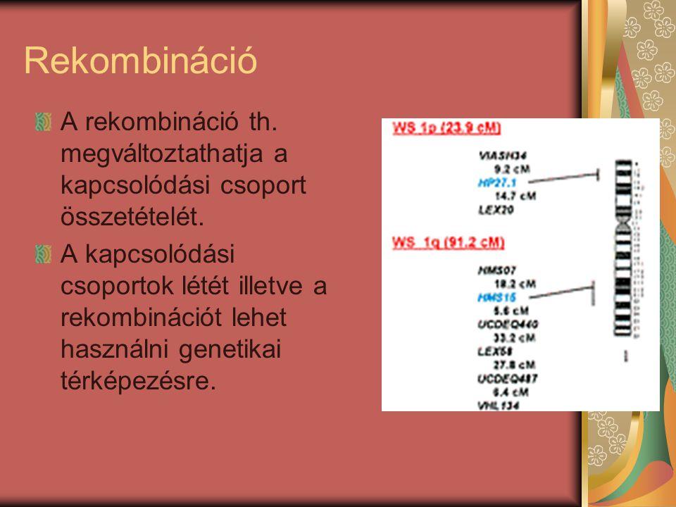 Rekombináció A rekombináció th. megváltoztathatja a kapcsolódási csoport összetételét. A kapcsolódási csoportok létét illetve a rekombinációt lehet ha