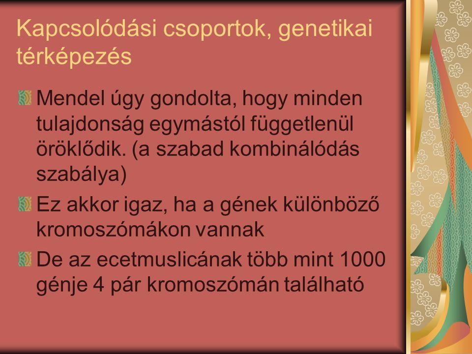 Kapcsolódási csoportok, genetikai térképezés Mendel úgy gondolta, hogy minden tulajdonság egymástól függetlenül öröklődik. (a szabad kombinálódás szab